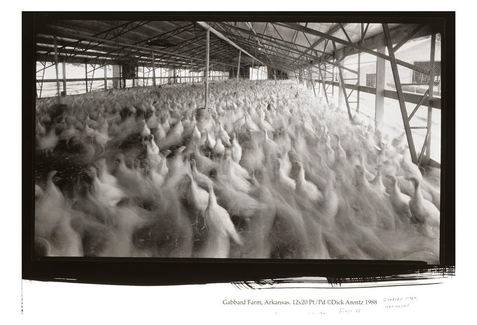 Gabbard Farm, Arkansas