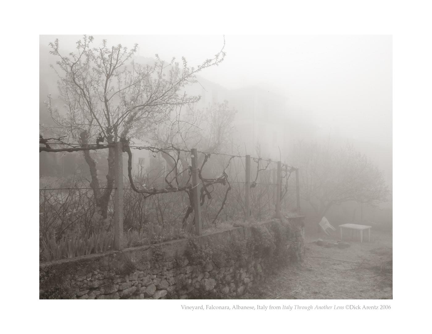 Vineyard, Falconara, Albanese, Italy - Italy Through Another Lens