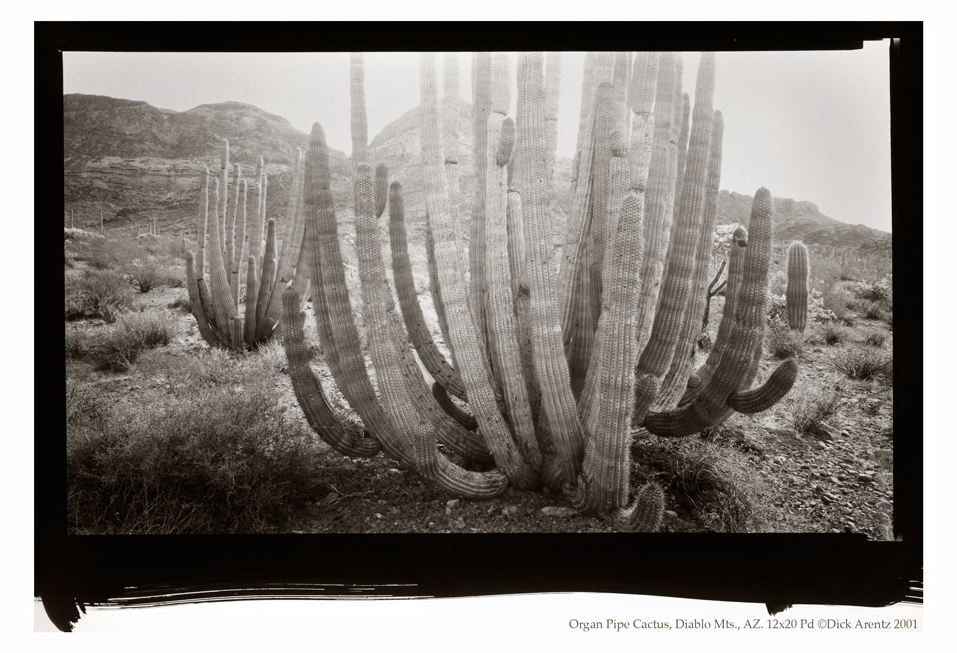 Organ Pipe Cactus, Diablo Mountains, Arizona