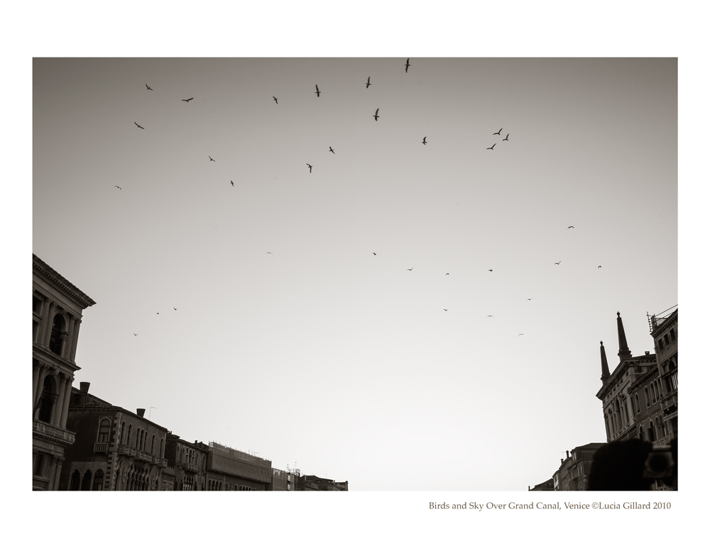 Birds and Sky Over Grand Canal - Venice in Winter