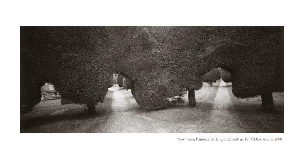 Yew Trees, Paineswick, England