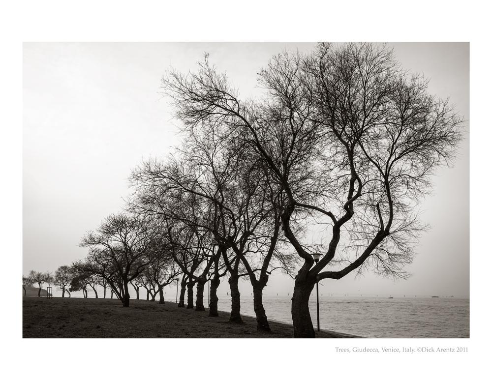 Trees-Giudecca-2011-8x10-Pd