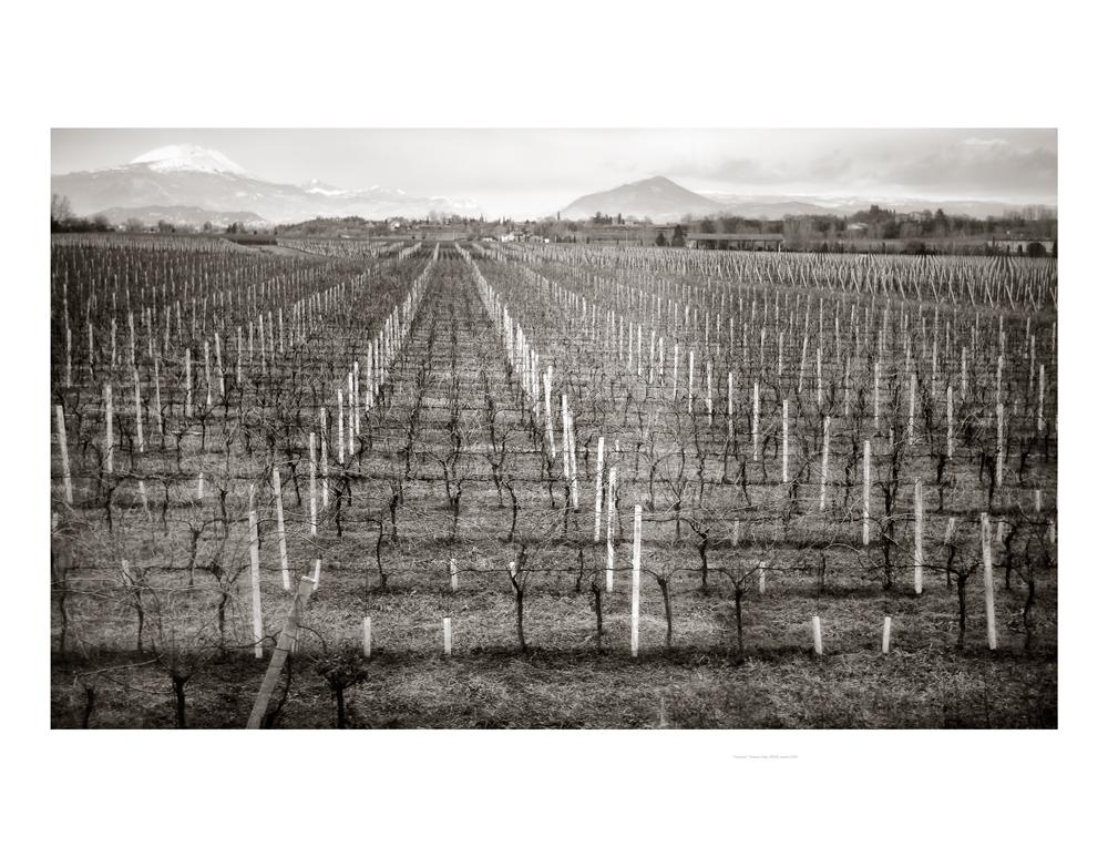 Vineyard-2010-8x10-Pd